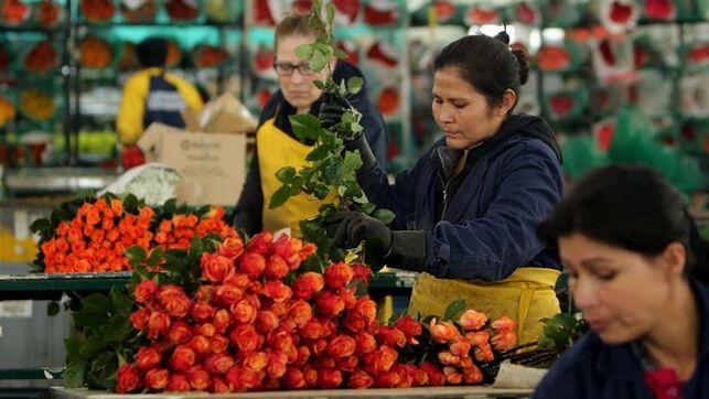 Explotación laboral y daños a la salud: la realidad tras las rosas colombianas que se regalan en SanValentín